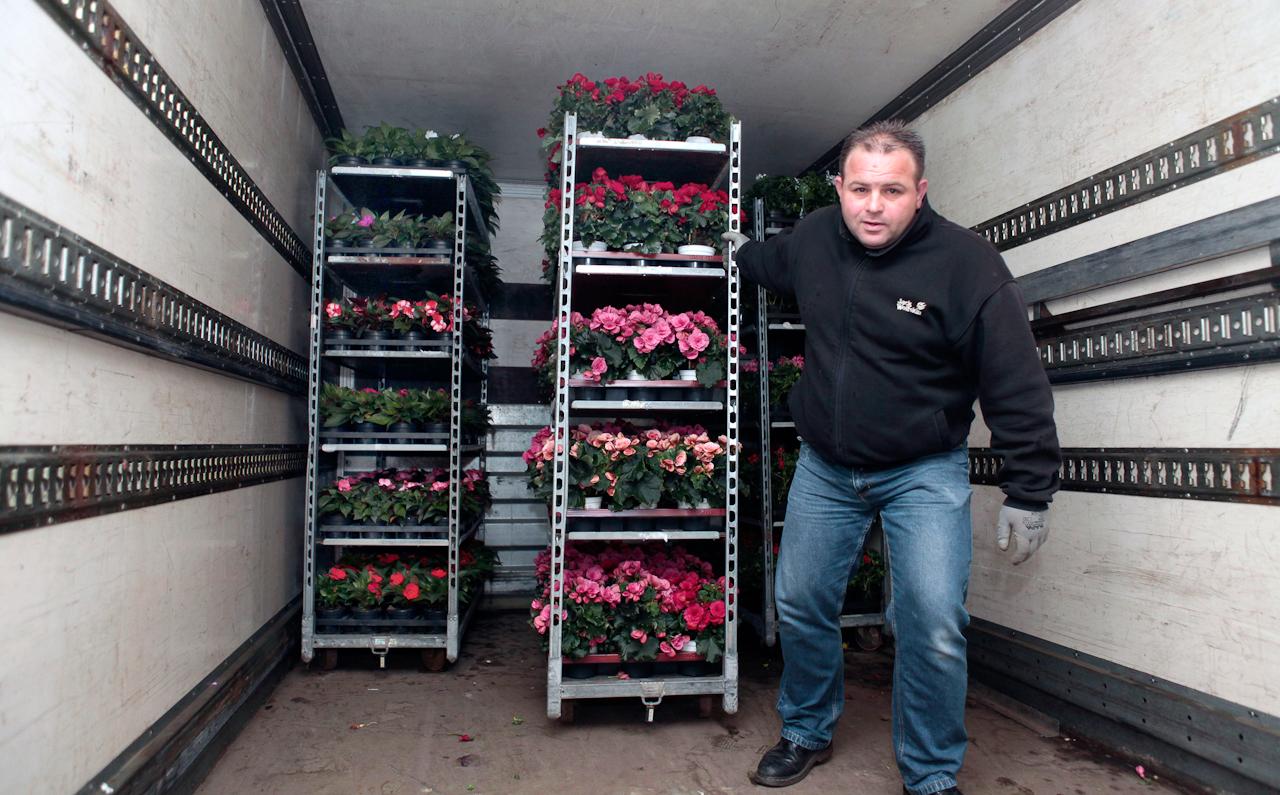 7. Mai 2010 Uhrzeit: 3.38h  Foto: Anja Cord  Blumen aus eigenem Anbau liefert  Markus Krone (Mitarbeiter der Firma Lange)  auf dem Blumengroßmarkt Dortmund an. Als erstes muss der LKW entladen werden Zur Zeit stehen Balkon- und Topfpflanzen hoch im Kurs.