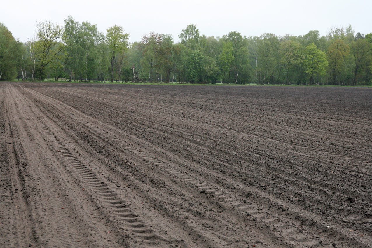Dieses Feld wurde umgepflügt und eingesät. Es werden Kartoffeln angebaut. Es befindet sich zwischen Altenhorst und Heinhaus. Im Hintergrund ist ein kleiner Birkenwald zu sehen. Einmal im Jahr findet in dieser Umgebung eine internationale Vielseitigkeitsprüfung, die Milfordtrophy, statt.  Die Aufnahme wurde am 07.05.2010 um 10.47 gemacht.