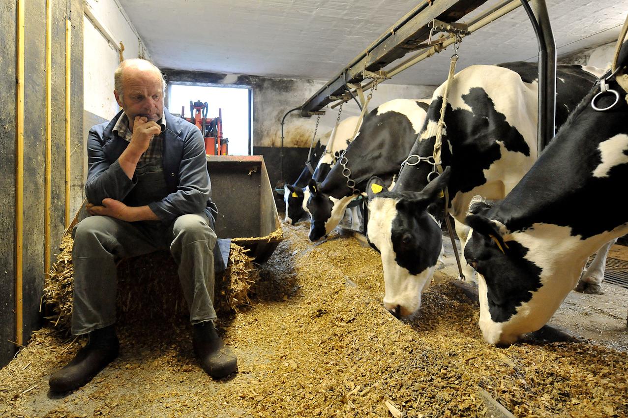 Der Landwirt Hans Gustke hat am Freitag (07.05.2010) seine Kühe im niedersächsischen Cluvenhagen (Landkreis Verden) fr?h morgens gef?ttert. Eigentlich wollte er um 6.30 Uhr mit dem Melken beginnen. Da eine seiner Kühe krank ist, muss er jedoch auf die Tierärztin warten, bevor er anfangen kann. Der Hof Gustke zählt noch zu den alten kleinbäuerlichen Vollerwerbsbetrieben, bei dem die gesamte Familie mit anpacken muss.