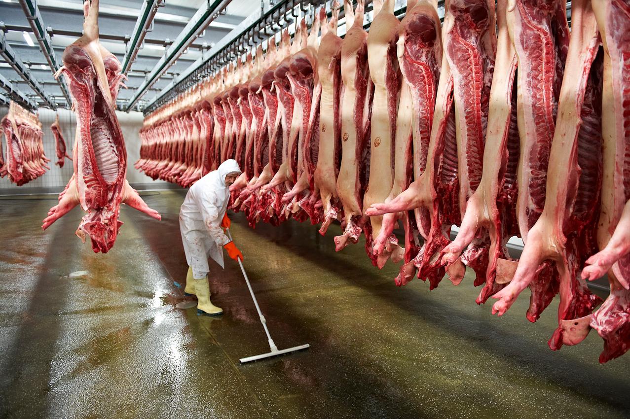 Schlachthof Vogler Fleisch LuckauSchlachthof der Firma Vogler Fleisch 29487 Luckau Ortsteil Steine, Wendland. Die angelieferten Tiere (hier Schweine) werden geschlachtet, ausgenommen und nach einer Nacht im Kühlhaus von polnischen Gastarbeitern zerlegt. Das Fleisch wird dann an die Kunden (z.B.Supermarktketten/Schlachtereien) geliefert. Nach der Schlachtung werden die Schweinehälften im Kühlhaus für eine Nacht gelagert. Der Boden des Raumes muss täglich gereinigt werden.