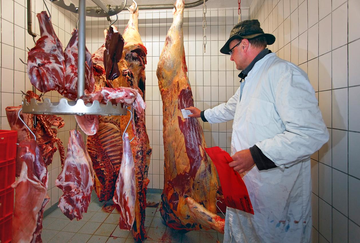 72537 Mehrstetten, Landkreis Reutlingen / Schwabische Alb, 07.05.2010: Ein Tag Deutschland. ----  Vorläufig beschlagnahmt ist diese Kuh im Kuhlraum eines bäuerlichen Direktvermarkters in Mehrstetten auf der Schwäbischen Alb. Alltag im Berufsleben von Tierarzt Thomas Conradi - und reine Routine. Die Beschlagnahmung ist nur vorübergehend, bis Grünes Licht aus dem Labor kommt. Dort wird durch Schnelltest untersucht, ob das Rind BSE-frei ist.