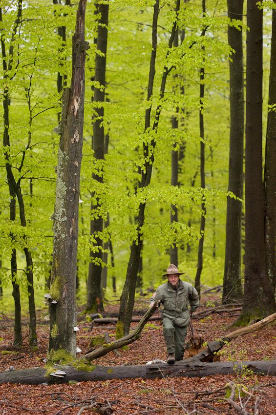 Der Rothaarsteig-Ranger Ralf Schmidt - Mitarbeiter des Landesbetriebs Wald und Holz Nordrhein-Westfalen - ist mit seiner Hündin Cora am Rande des Waldskulpturenweges zwischen Bad Berleburg und Schmallenberg unterwegs, um nach den Winterstürmen zu prüfen, ob von lockeren Ästen eine Gefährdung für Wanderer ausgehen konnte.  - Dieses Bild wurde am 07.05.2010 um 18:53:46 Uhr in Schmallenberg-Schanze (Sauerland, Deutschland) aufgenommen.