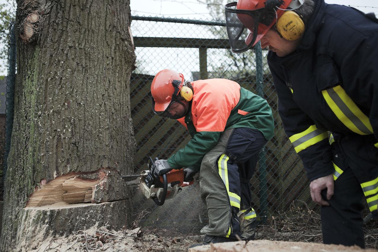 Feurewehrleute der Berufsfeuerwehr Bremerhaven beim Fällen einer 130 Jahre alten Eiche.