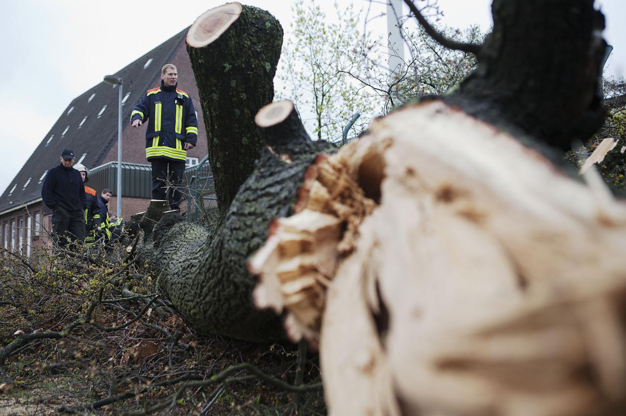 Feurewehrleute der Berufsfeuerwehr Bremerhaven nach dem Fällen einer 130 Jahre alten Eiche.