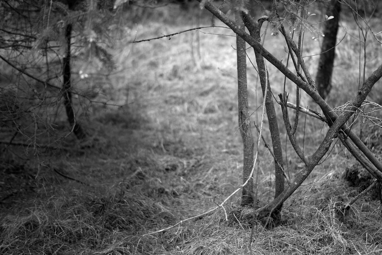 In den Isarauen bei Oberhummel. Wege durchs Unterholz.