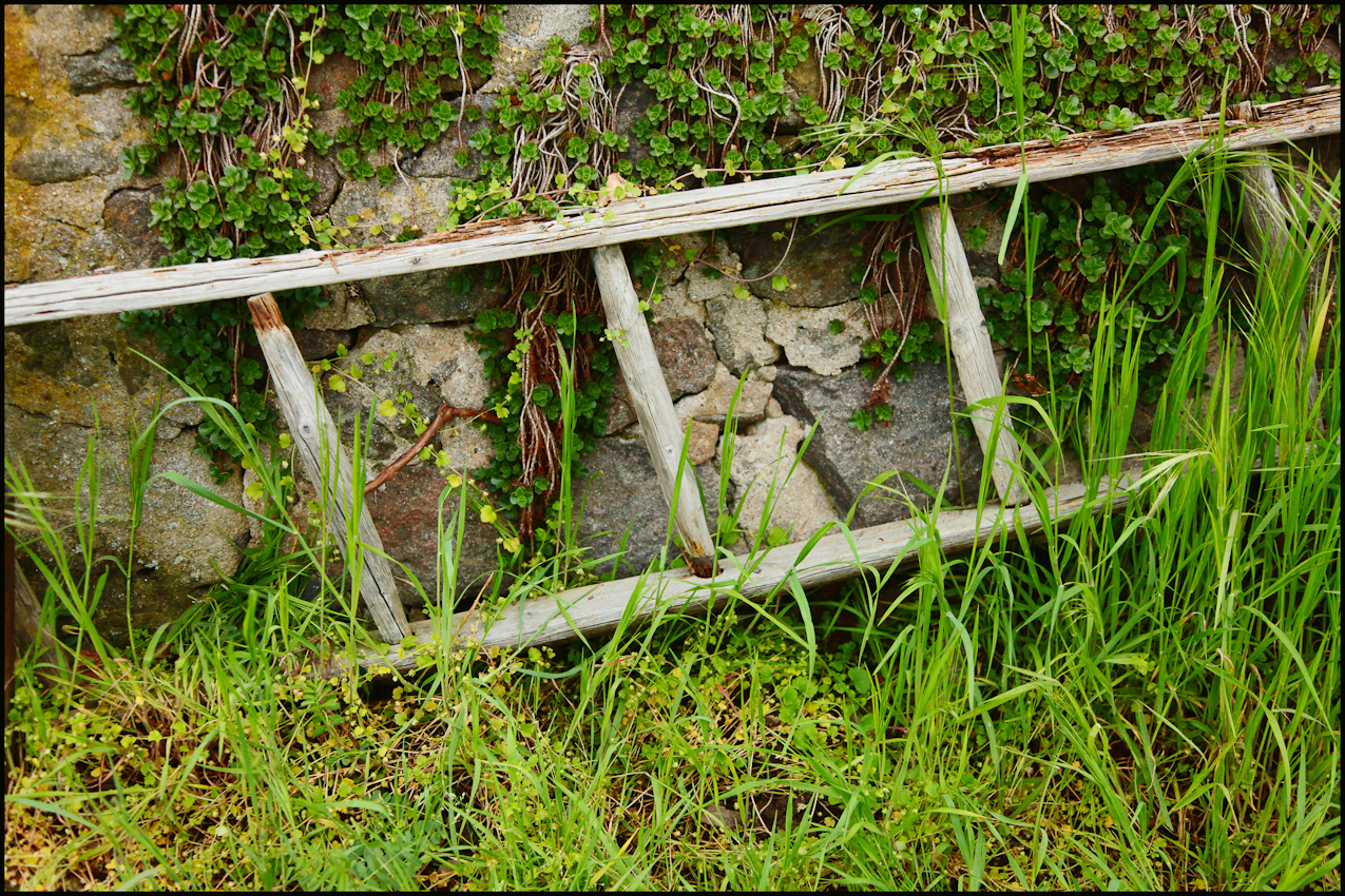 Stillleben einer eingewachsenen Leiter. Auch solche Dinge kann man hier entdecken. Die Leiter hat wohl schon lange keiner mehr angefasst.