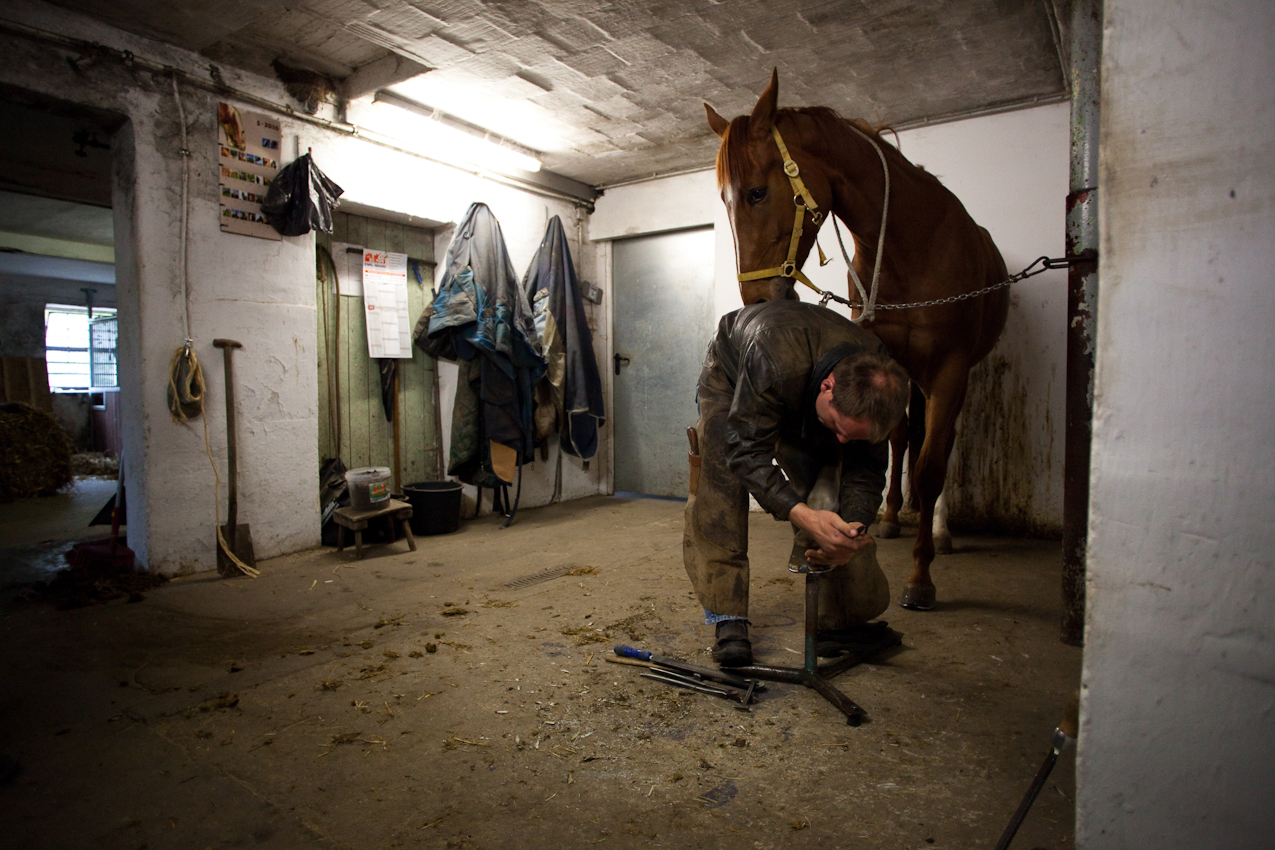 """""""Pedikure im Pferdestall"""": Regelmäßig kommt der staatlich geprüfte Hufbeschlagsschmied Mario Eggebrett aus Bergen/Offen mit seiner mobilen Werkstatt vorbei, um die Tiere vor Ort versorgen zu können. So auch an diesem Morgen. Hier konzentriert er sich gerade auf den Feinschliff des Hufbeschlags bei einer der Zuchtstuten."""