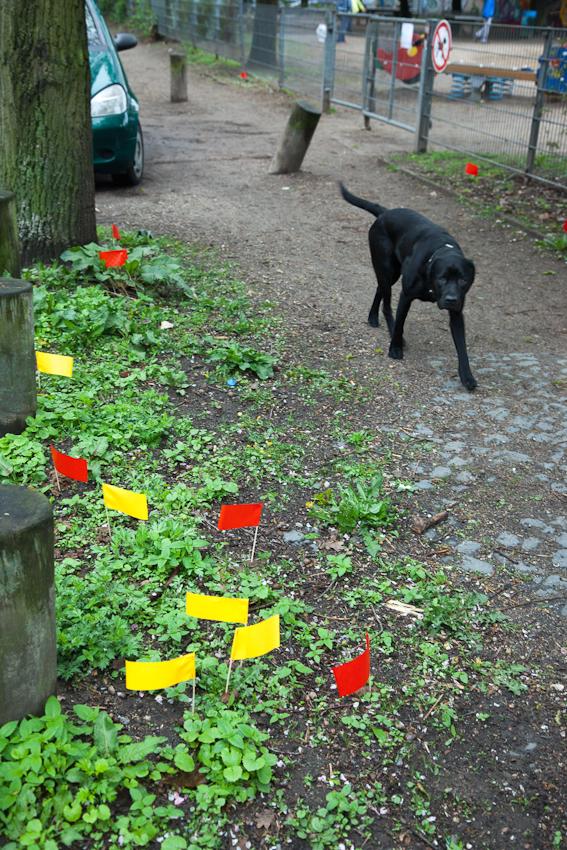 """16:47 Uhr: Kampf dem Hundekot. SchülerInnen der Grundschule """"Bei der Osterkirche"""" in Hamburg-Ottensen haben den Hundekot in der Nachbarschaft mit farbigen Fähnchen markiert, um gegen die Verschmutzung zu protestieren."""