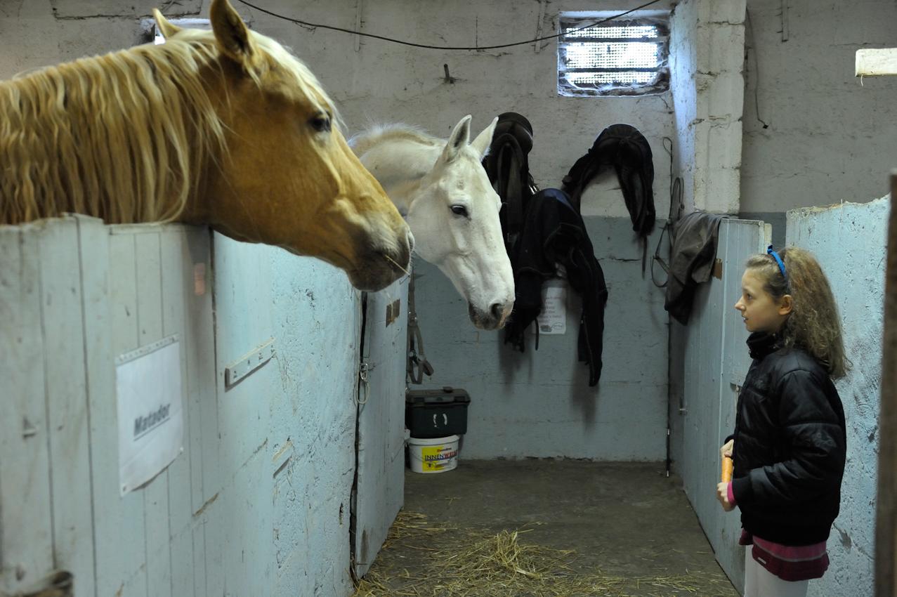 15 Uhr. Endlich auf dem Reiterhof! Britta will ihr Lieblingspferd, den Hengst Matador, mit einer Möhre füttern. Es dauert aber eine ganze Weile, bis sie Ihre Angst überwindet und sich traut.