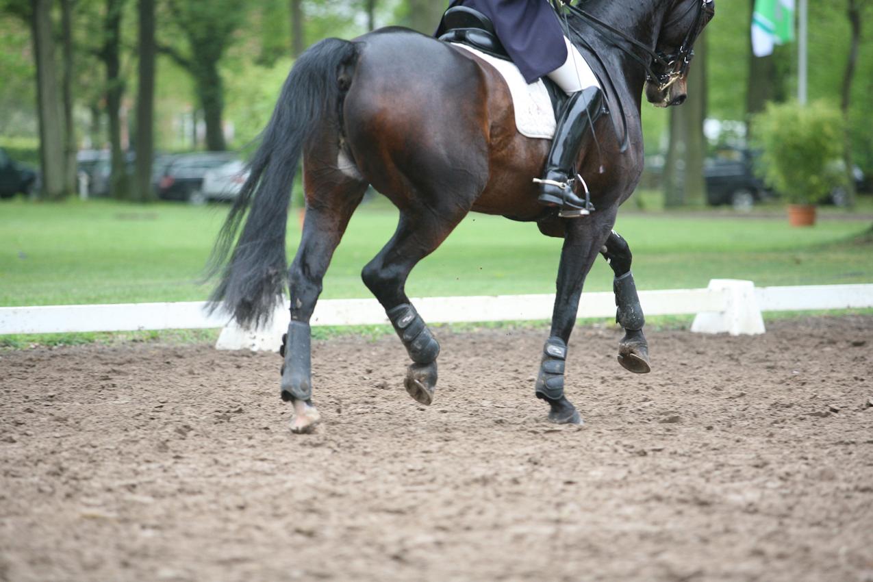 Ein Pferd trabt über das Dressurviereck.