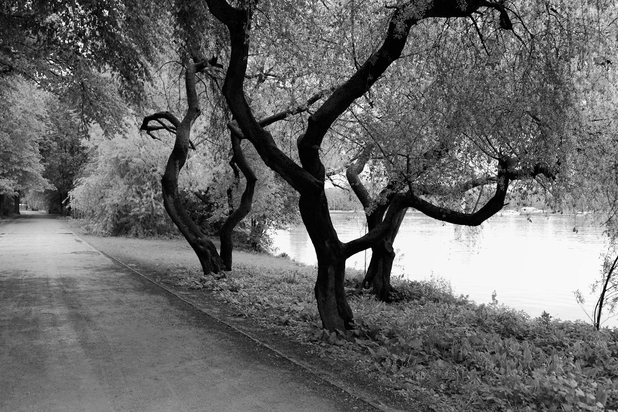 Bäume am Maschsee.