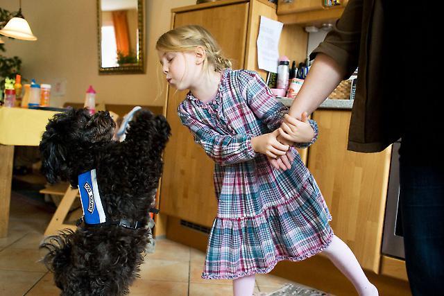 Das Leben mit einem Diabethikerwarnhund. Luisa hat Diabetes. Um mit der Krankheit besser leben zu können bekam sie von ihren Eltern einen Diabethikerwarnhund. Der Hund, Bolle, erkennt schon am Atemgeruch wenn der Blutzuckerspiegel sinkt. Ohne ihn müsste alle 10 Minuten gemessen werden. Luisa haucht Bolle an, damit er erriechen kann, ob sie unterzuckert ist. Währendessen hält Luisa die Hand ihrer Mutter. Sie ist zu Hause in der Küche. Der Hund trägt seine Behindertenbegleithund und Service Dog-Weste.