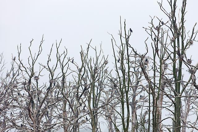 Gespensterwald im Regen 03