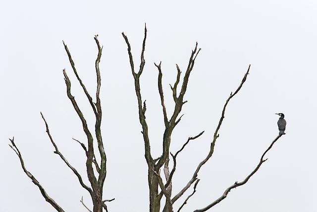 Vogel des Jahres 2010 - 07