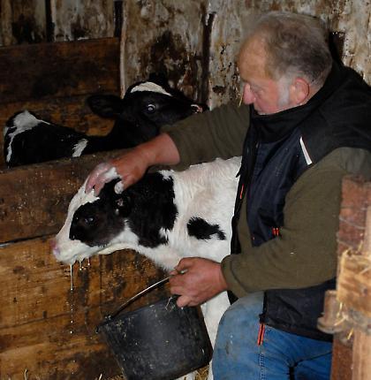 Bauernhof mit Milchwirtschaft 4