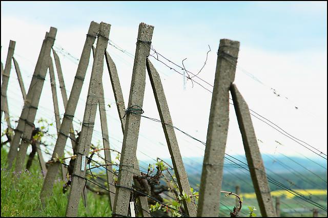 Sachsens Weinanbaugebiet 7